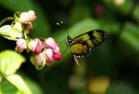 farfalla_amanda vivan.jpg